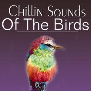 Chillin' Sound of Birds
