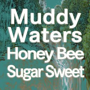 Honey Bee   Sugar Sweet (Original Artist Original Songs)