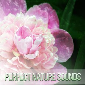 Perfect Nature Sounds – Get Positive Energy with Calm Melody